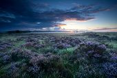 picture of ling  - summer sunrise over marshes with flowering heather - JPG