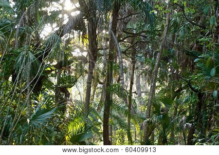 View Of Sub Tropical Forest