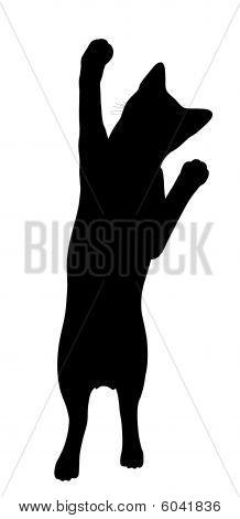 Silhueta de gato ilustração