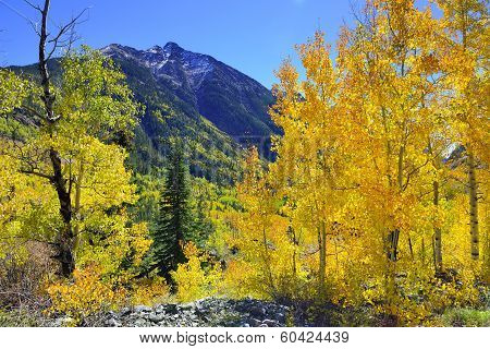 Yellow, Red And Green Aspens In The Mountains Of Colorful Colorado During Foliage Season