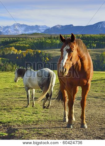 Horses In Front Of The Colourful Mountains Of Colorado During Foliage Season