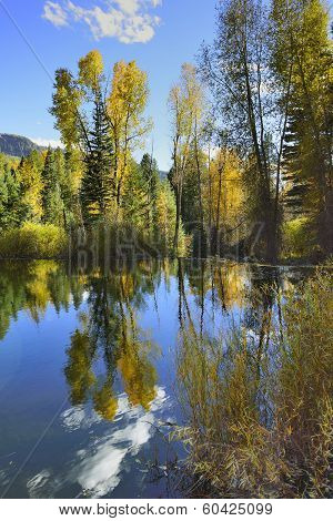 Colourful Aspens Of Colorado Reflecting In A Lake During Foliage Season