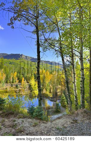 Colourful Aspens Of Colorado And A Lake During Foliage Season