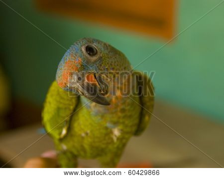Colorful, Curious, Parrot