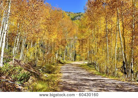 Yellow, Red And Green Aspens In Colourful Colorado During Foliage Season