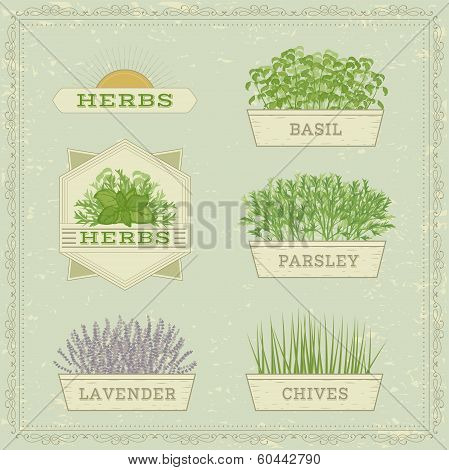 isolated herbs