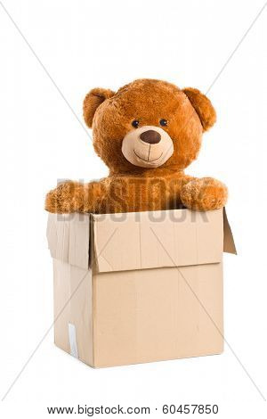 teddy bear in paper box on white background