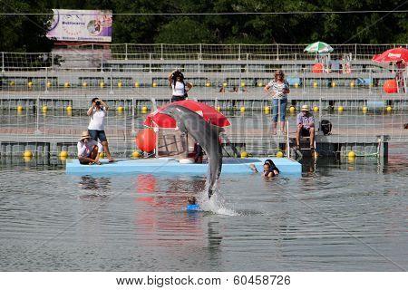 Dolphinarium In Varadero