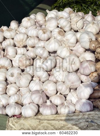 Fresh Garlic Cloves