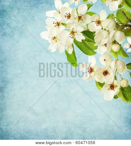 Paper background with Apple Branches.