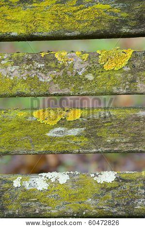 Lichen and moss on wood bench