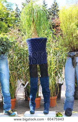 Various pants used as flowerpots