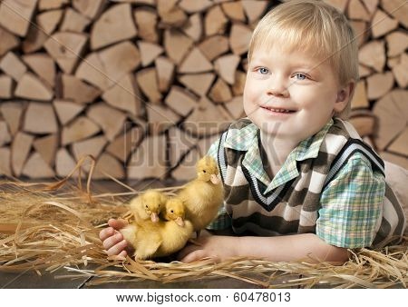 Boy and three little yellow ducklings