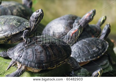 Terrapin Power