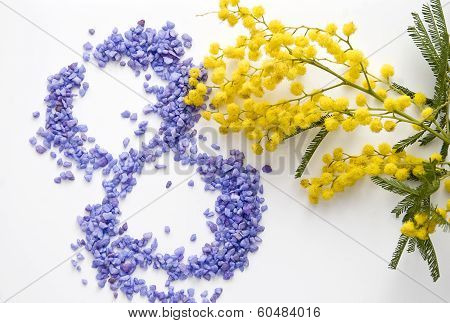 International Women's Day mimosa flower