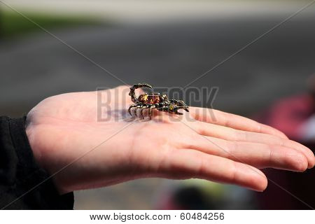 Jewelry miniature of scorpion on the hand