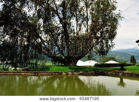 Tree By A Tilapia Sanctuary
