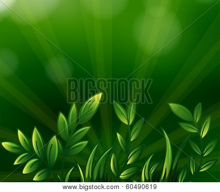 Illustration of the green leafy plants