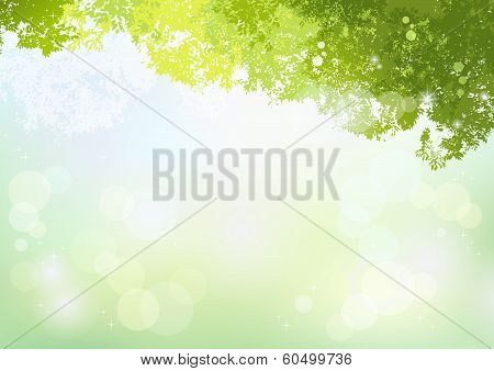Spring Green Background With Soft Sunlight