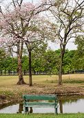 stock photo of lapacho  - Pink Trumpet Blossom And Bench In Green Park - JPG
