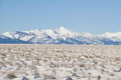 stock photo of sagebrush  - The frozen and snowy sagebrush steppe and white alpine peaks of the Lemhi Valley and Mountain Range in Central Idaho - JPG