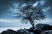 Leafless Tree Silhouette On Rocky Sea Coast. Monochrome Photo
