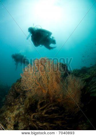 Diver Sillouette