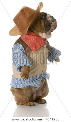 Dog Dressed Up As A Cowboy