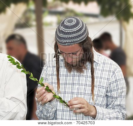JERUSALEM, ISRAEL - SEPTEMBER 18, 2013: Young religious Jew in a gray skullcap carefully chooses ritual plant - myrtle for Sukkot.