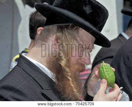 JERUSALEM, ISRAEL - SEPTEMBER 18, 2013: Traditional market before the holiday of Sukkot. The religious Jew with red beard and long side curls carefully examines ritual citrus