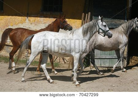 Batch of horses are together in corral