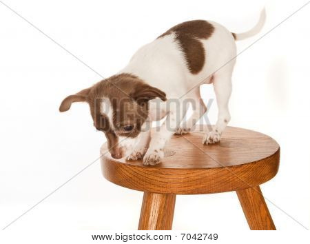 Puppy On A Stool