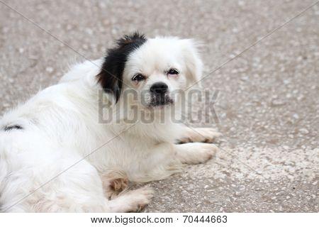 White Dog Dormant.