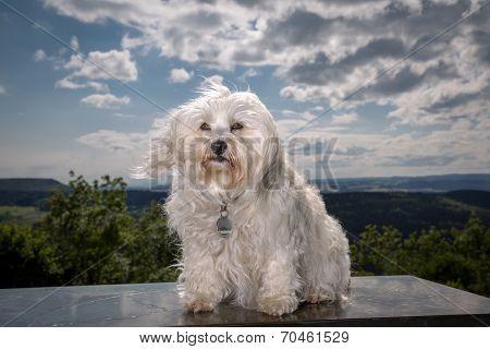 Wind In Dog Hair