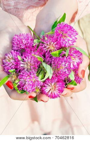 Many Wishes. Girl Hands Holding Meadow Clover/trefoil Bunch.