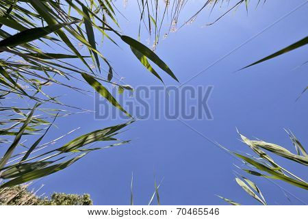 Reed Green Plants