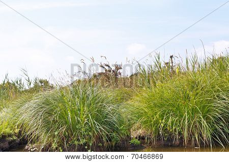 Green Carex On Of Briere Marsh, France