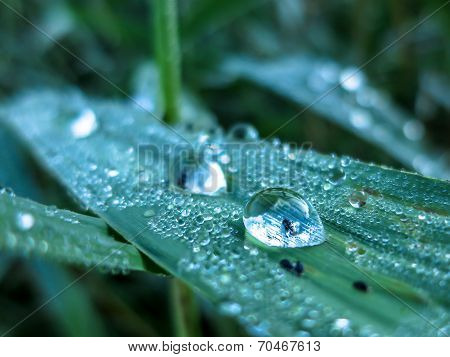 Insect In Dewdrop