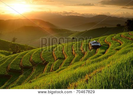 Landscape Of Rice Terraces