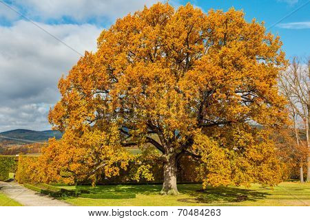 Golden tree in the park in Cesky Krumlov