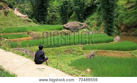 Young Child Sitting Near Terraced Rice Field