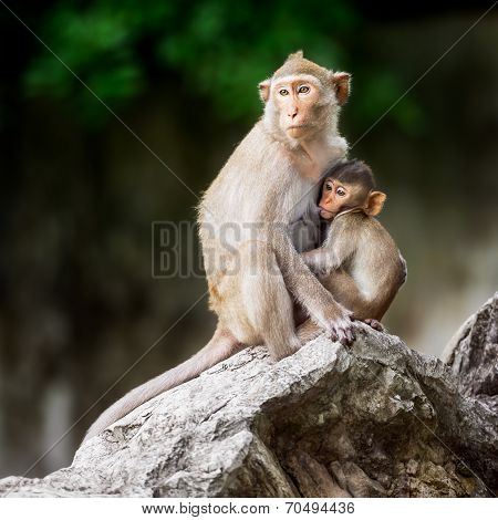 Little Monkey And Mom
