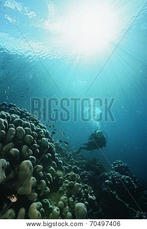 Underwater shoot of a scuba diver with rays of light streaming from surface