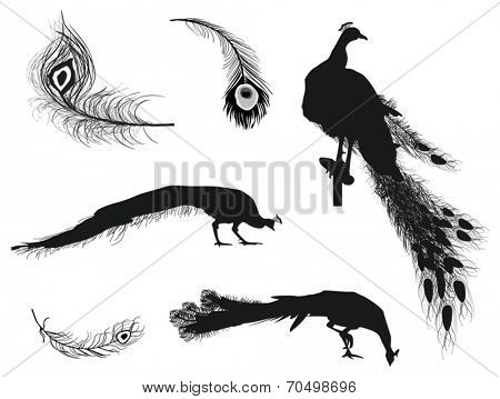 illustration with peacocks and feathers silhouettes isolated on white background