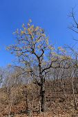 foto of drought  - Dried trees in the drought forest inside drought empty Song Long Song  - JPG