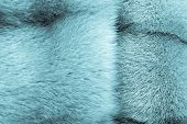 pic of indigo  - fluffy texture of fur of wild animals of indigo color for abstract backgrounds - JPG