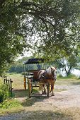 stock photo of carriage horse  - horse with carriage in village de Breca in Briere Regional Natural Park France
