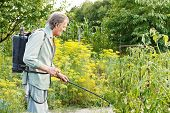 foto of pesticide  - old man spraying of pesticide on country garden in summer - JPG