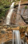 stock photo of budge  - Location : Sri Lanka - Hunnasgiriya