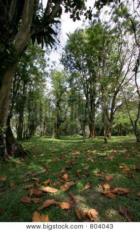 Taiping Lake Gardens Park